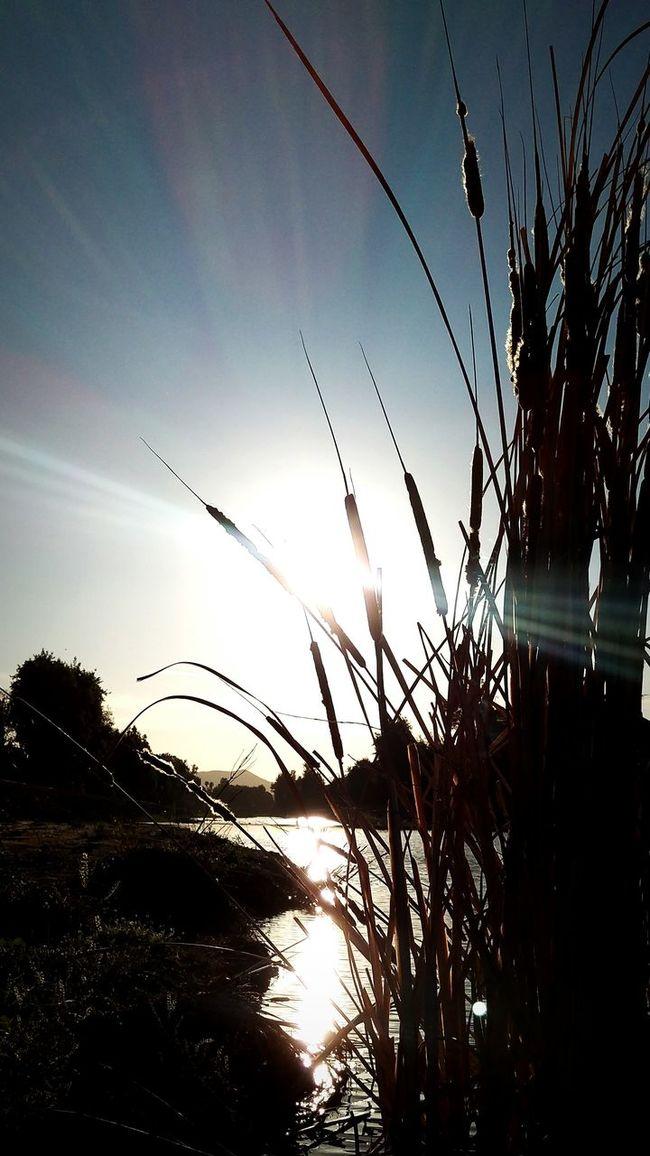 Sunset_collection Sundown Sunset Silhouettes Creekside Sunset