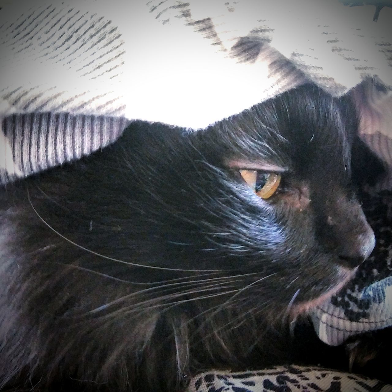 Teddiebear...pondering...💜💜💜💙💙💙 Hanging Out Check This Out Taking Photos Hello World Cheese! Relaxing Animals Pawsome Beautiful Eyes Cat Eyes Catsofeyeem Bayareaphotography Animal Photography Hayward Ca Catstarcat Catlovers Paws And Purrs Blackcatbeauties ❤️🔥❤️ Loveallanimals Precious Little Moments Blackcats Blackcatsrule