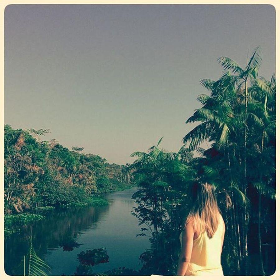 Sitio Igarapé Breves IlhadoMarajo Pará Brazil