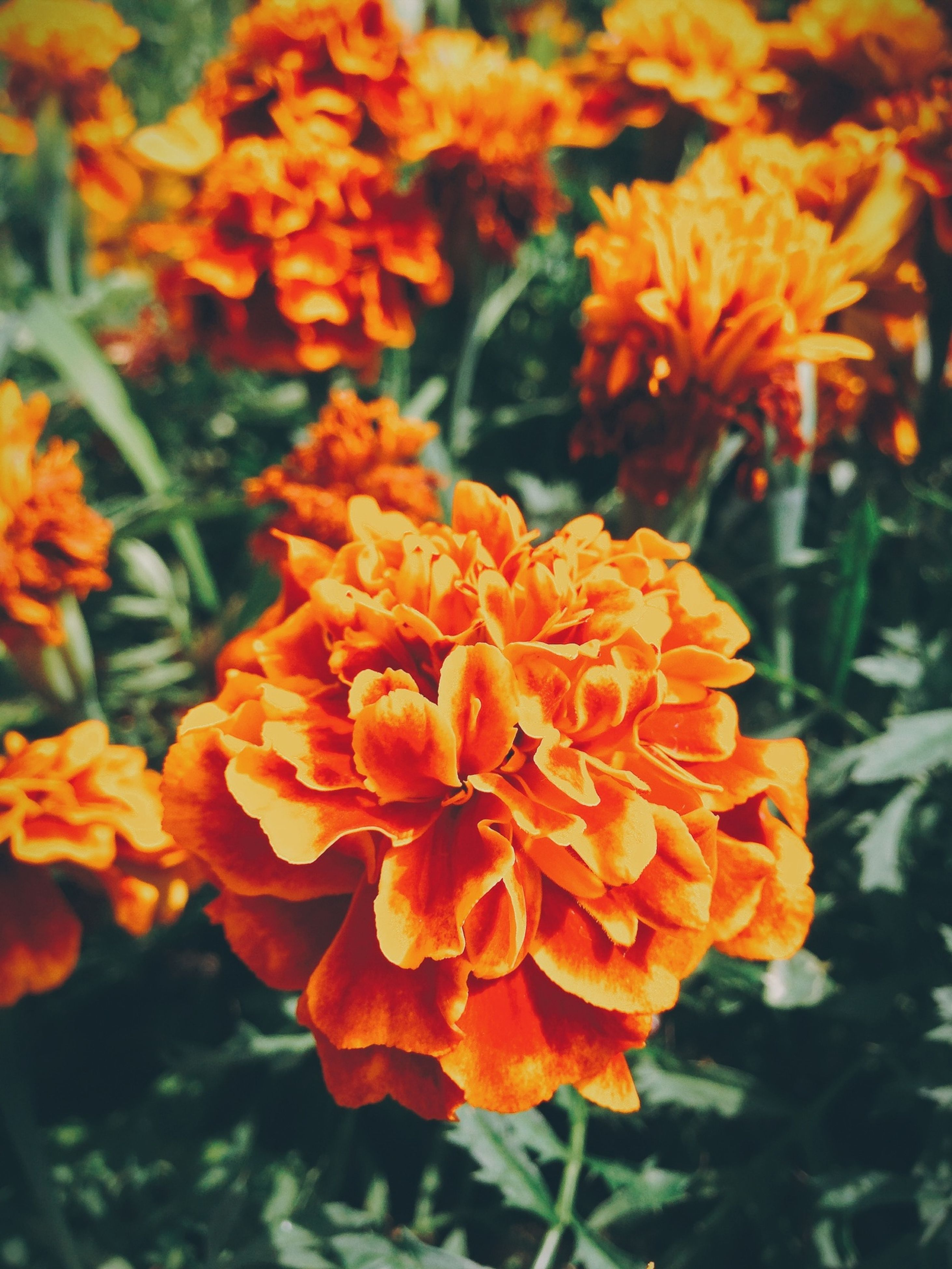 flower, petal, freshness, orange color, fragility, flower head, growth, beauty in nature, focus on foreground, blooming, close-up, nature, plant, in bloom, park - man made space, yellow, outdoors, red, no people, botany