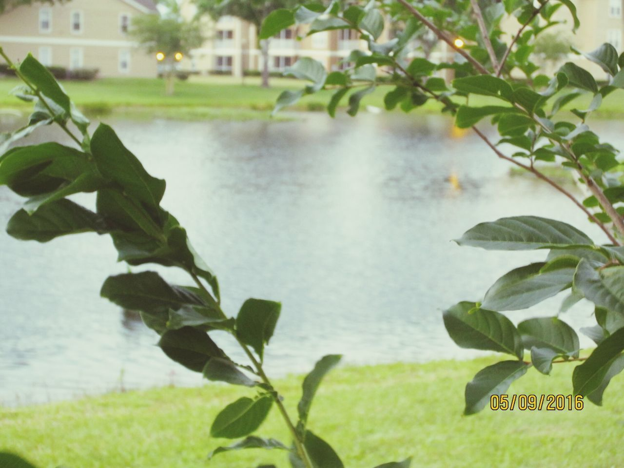 leaf, plant, water, nature, growth, beauty in nature, green color, no people, focus on foreground, day, outdoors, scenics, foreground, grass, tree, close-up, freshness, sky