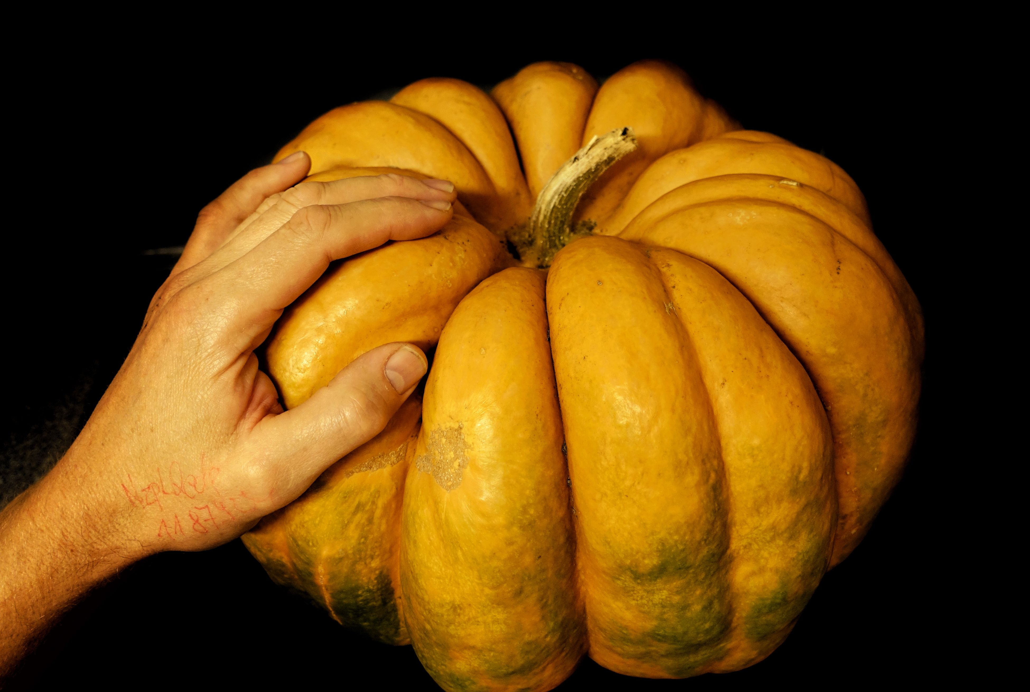 Pumpkin Muscat Pumpkin SONYrx100m3 EyeEm Nature Lover The Colors Of Autmn The Beauty In My Gardens Sony Rx100 Iii Sony Rx100 M3 Autumn Colors Hand Going to eat that beauty 😎🎃🎃🎃🎃🎃🎃🎃🎃🎃🎃🎃🎃