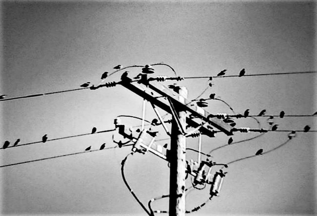 10/16 every photographer remembers these types of photos growing up. Travel Nostalgia Oceanside Coast Highway Powerlines Blackandwhite Birds Hanging Out Enjoying Life California Popular EyeEm Best Shots - Black + White Beautiful Built Structure Nature Day Sky Scenics Beauty In Nature The Week Of Eyeem Check This Out Eye4photography  Photography EyeEm Best Shots Travel Destinations