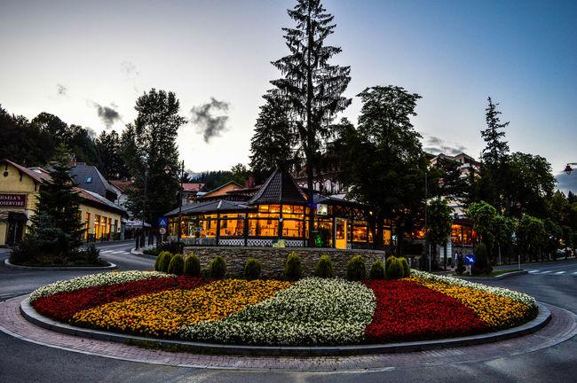 City Flowers Illuminated Lights Outdoors Sky Street Tree