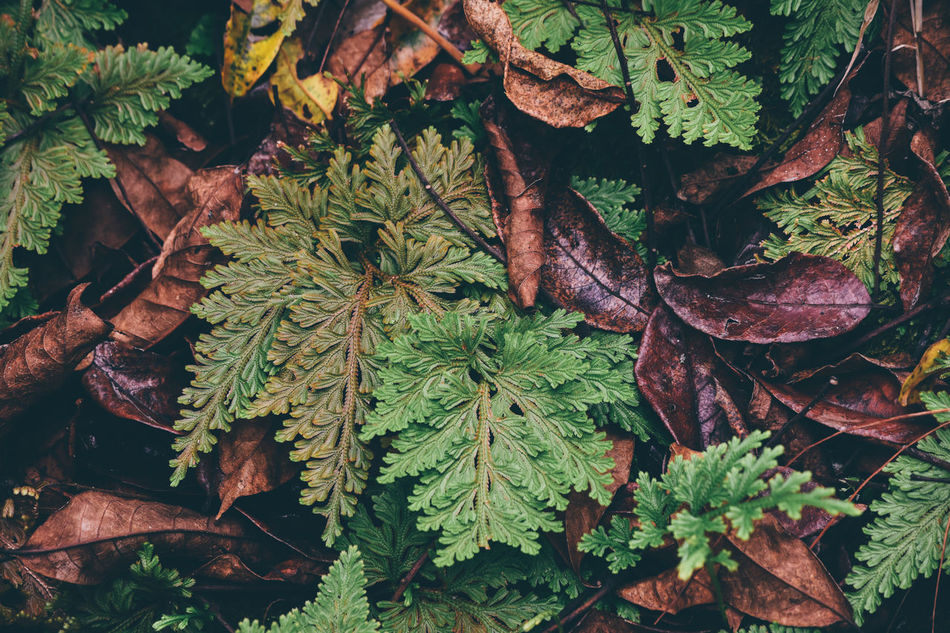 A Autumn Backgrounds Beauty In Nature Change Close-up EyeEmNewHere Fashion Flora Forest Garden Green Color Growth Leaf Leaves Nature Nature Outdoors Pattern Plant Season  Spring Textured  Tree Vintage