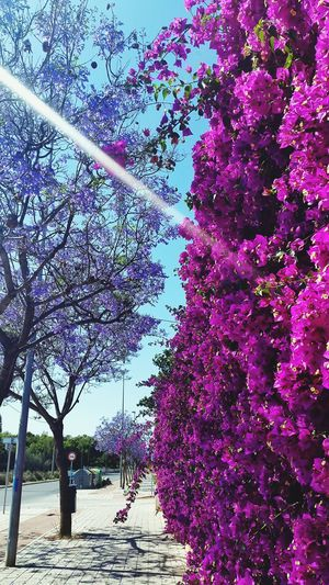Taking Photos Mobilephotography Alicante Nature Beautiful Flowers