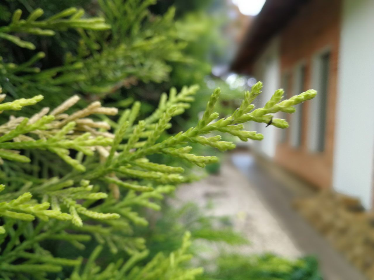 green color, focus on foreground, growth, close-up, no people, plant, day, selective focus, outdoors, nature, freshness, leaf