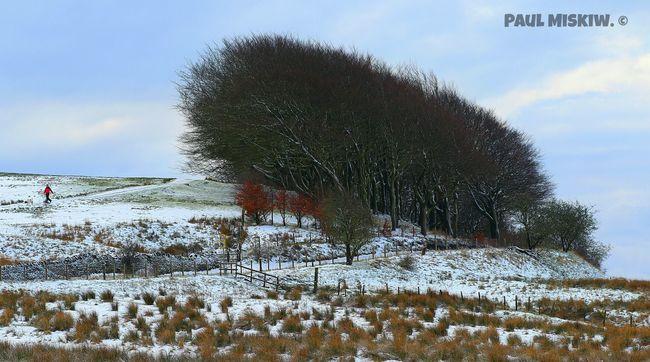 Treeline Snow Trees Belmont