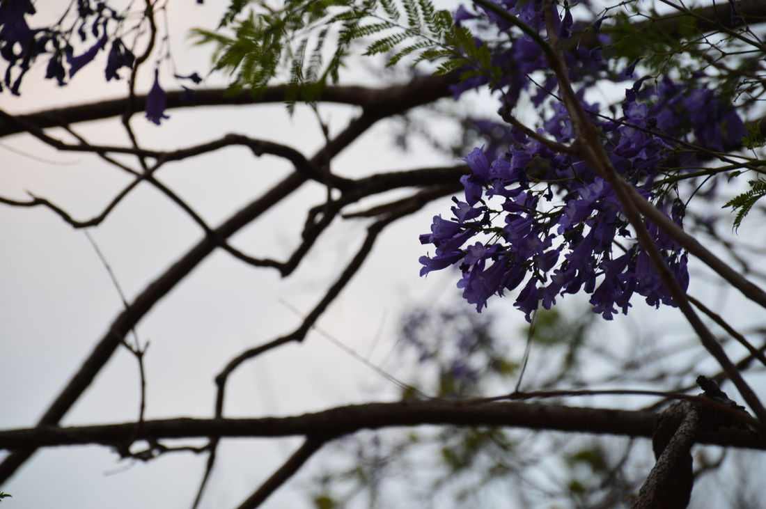 Simplicity. Beautiful Beauty In Nature Branch Branches And Leaves Close-up Dust Of Light Flower Growth Natural Beauty Nature Photography Nature_collection Plant Purple Flower Selective Focus Small And Swift Small Things In Life Smart Simplicity Sunset_collection