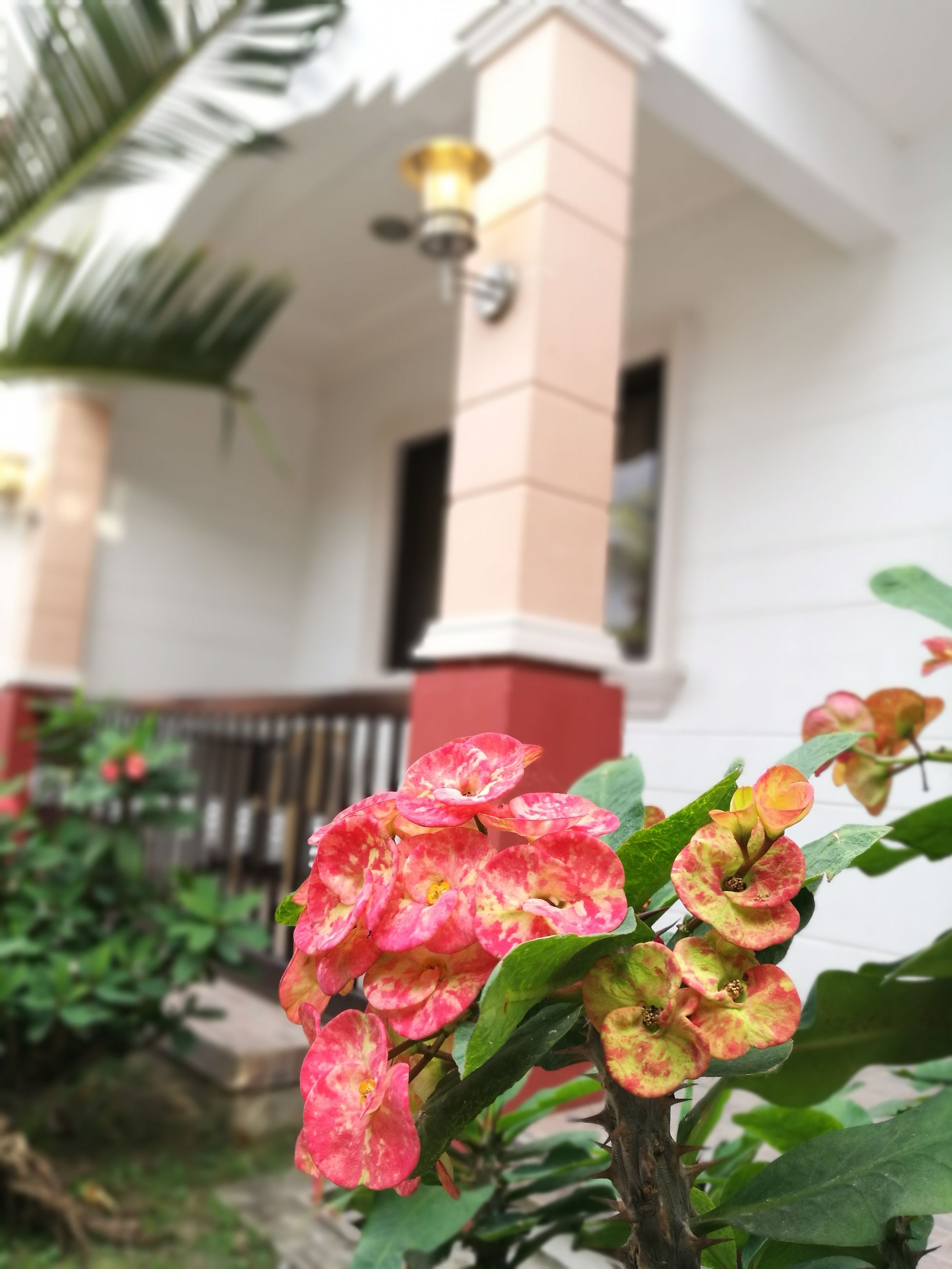 flower, plant, built structure, building exterior, architecture, no people, focus on foreground, growth, nature, freshness, fragility, pink color, close-up, day, flower head, beauty in nature, outdoors