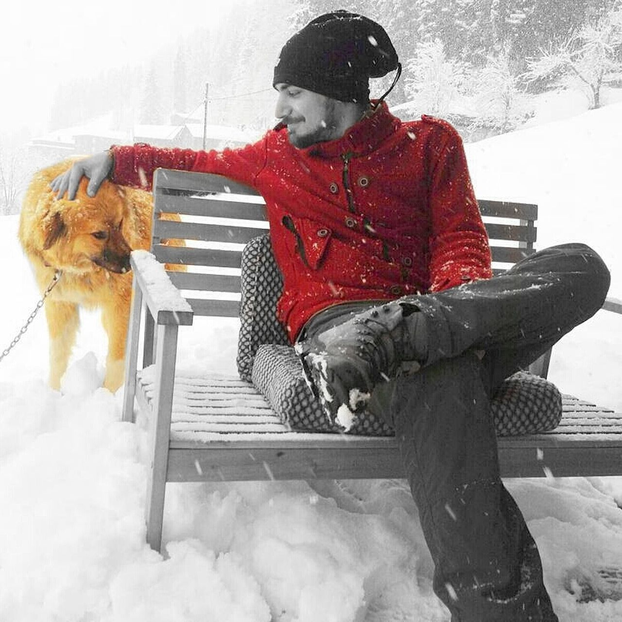 winter, snow, cold temperature, warm clothing, one person, dog, sitting, full length, day, pets, real people, outdoors, leisure activity, domestic animals, snowing, one animal, animal themes, mammal, nature, young adult, people, adult