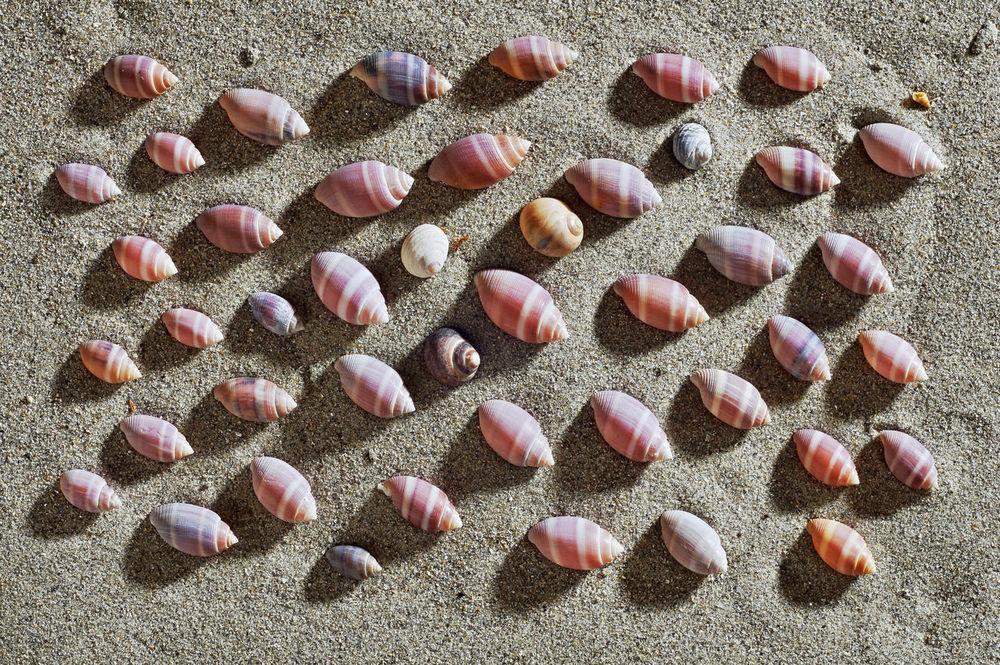 seashells in beach, shells in sand A Coruña Atlantic Atlantic Coast Beach Beach Sand Beach Scene  Beach Sunset Galicia Calidade Galicia, Spain Galicia,spain Paradise Seashell Seashells Shell Shells Shells Beach Shellsheddyphotography Shells🐚 Summer Beach