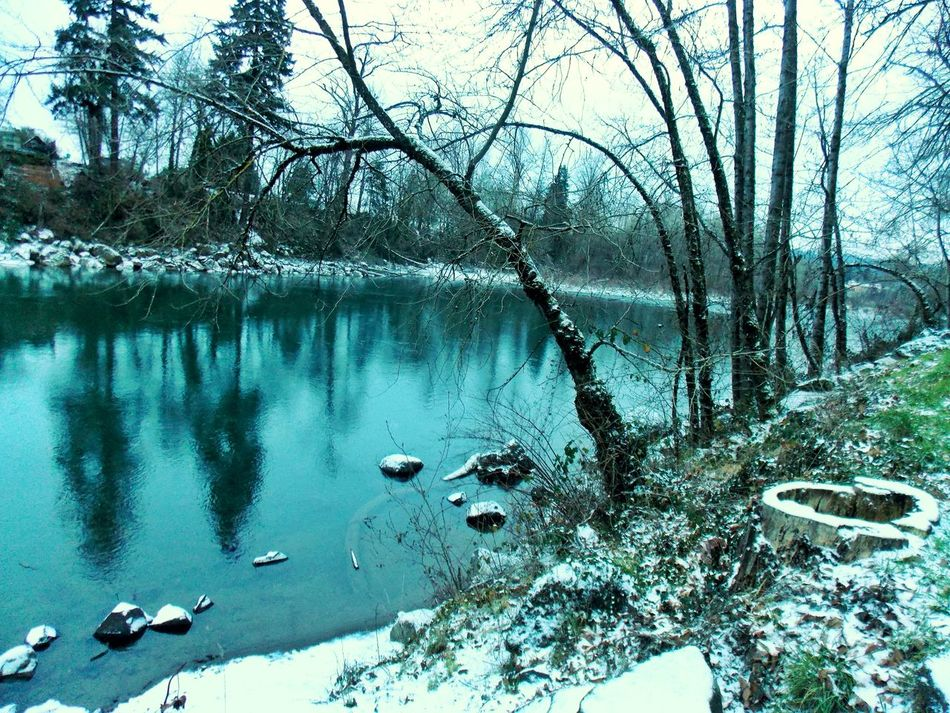 Snow Day ❄ Gladstone OR. Clackamas River Taking Photos Flexible Tree Great View