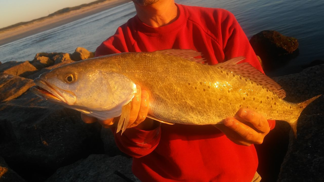 Fish Fishing Check This Out Talking Pictures Taking Photos Corpus Christi Nature Outdoors Vacations Coastline Corpus Christi, Tx Speckeled Trout