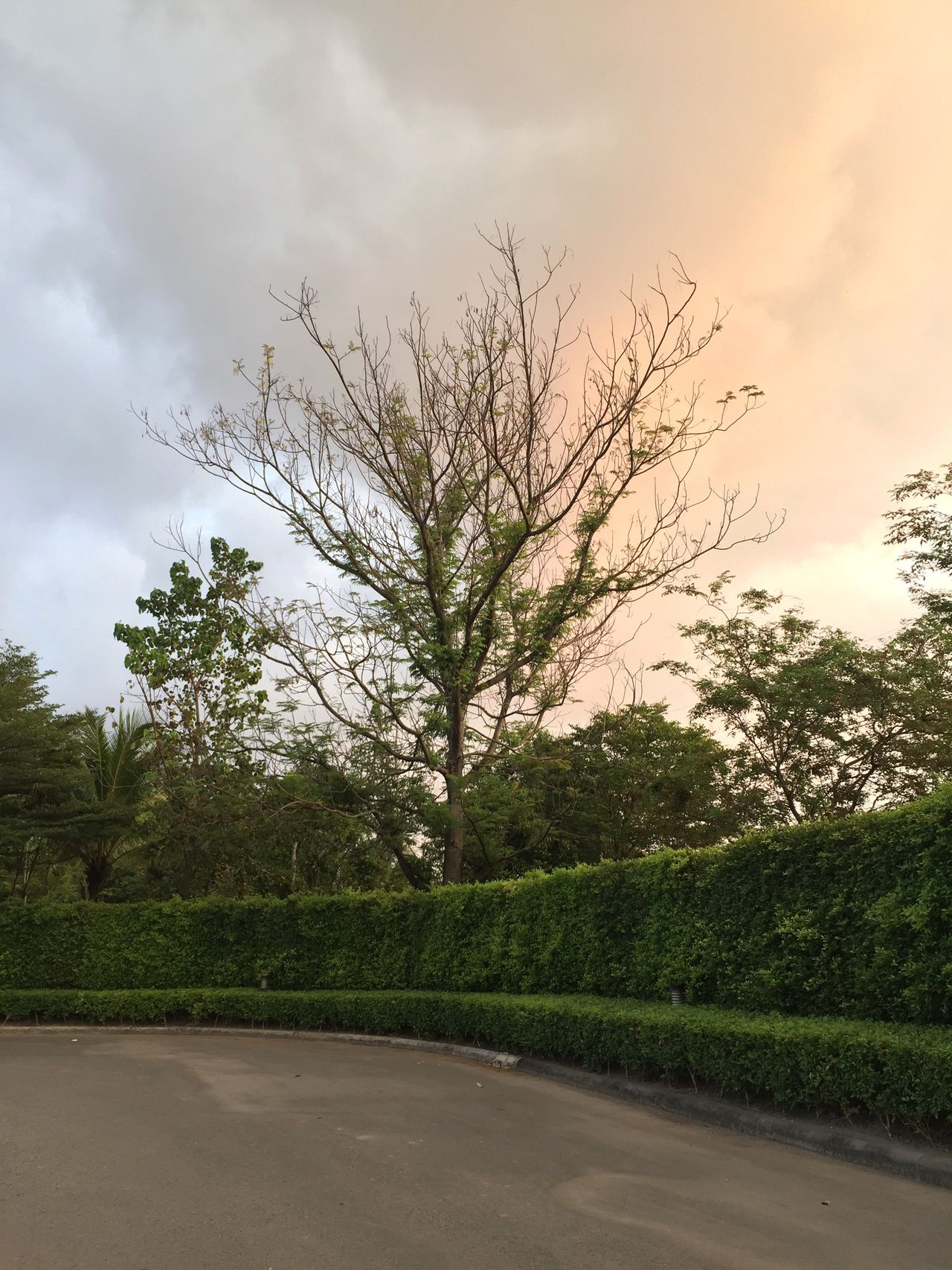 Tree Sky Road Nature No People Growth Outdoors Cloud - Sky Tranquility The Way Forward Beauty In Nature Tranquil Scene Day Scenics Landscape