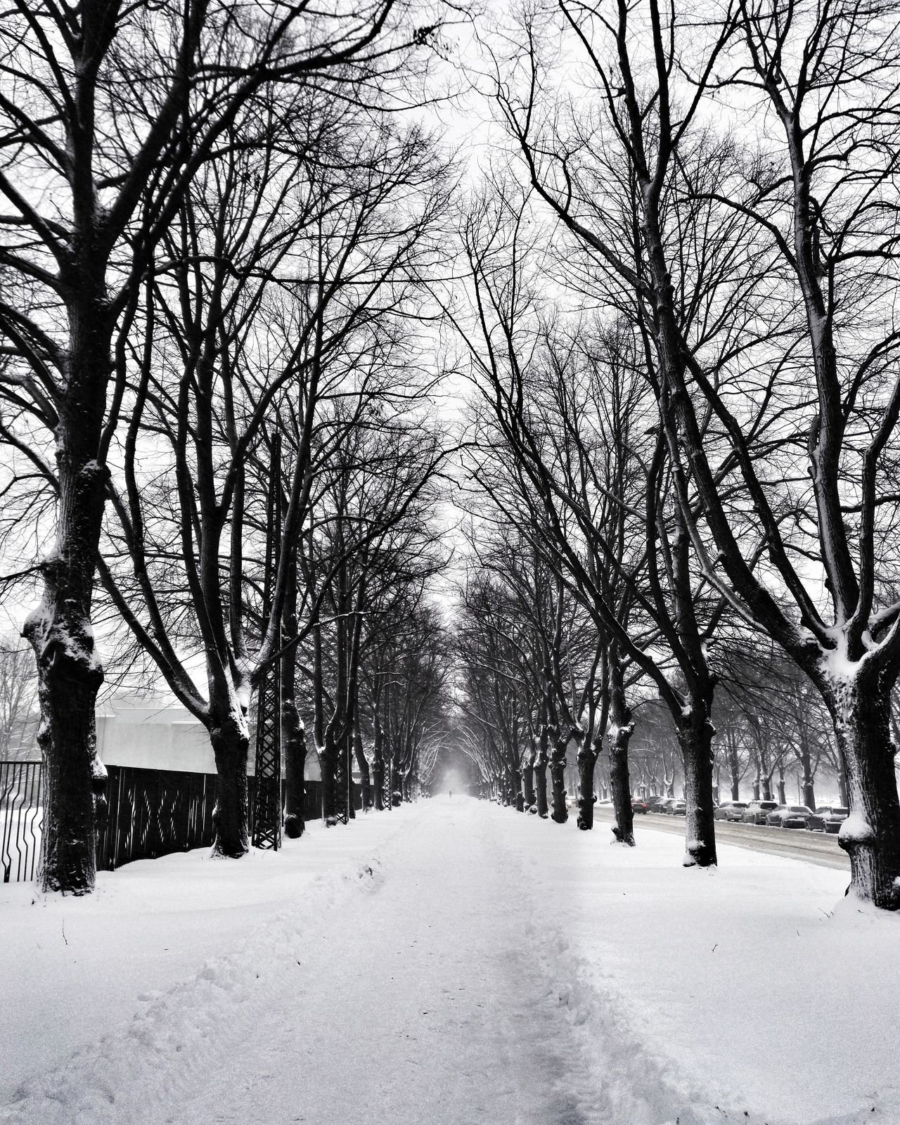 Tree Nature Cold Temperature Winter Snow Beauty In Nature Day Cityscape Black And White Enjoying Life Hello World Nature Night