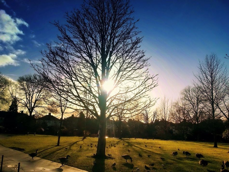 Winter Nature Park. Nature Sunset #sun #clouds #skylovers #sky #nature #beautifulinnature #naturalbeauty #photography #landscape Hugging A Tree Traveling