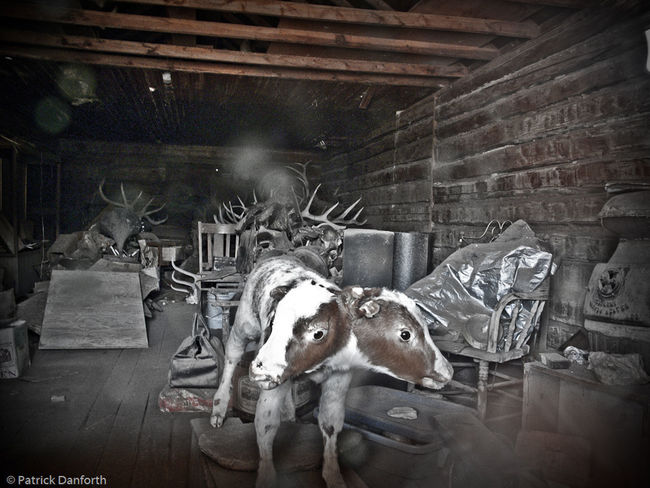 Two heads could be better than one Abandoned Ghost Town Oddity Old Run-down Two Headed Cow