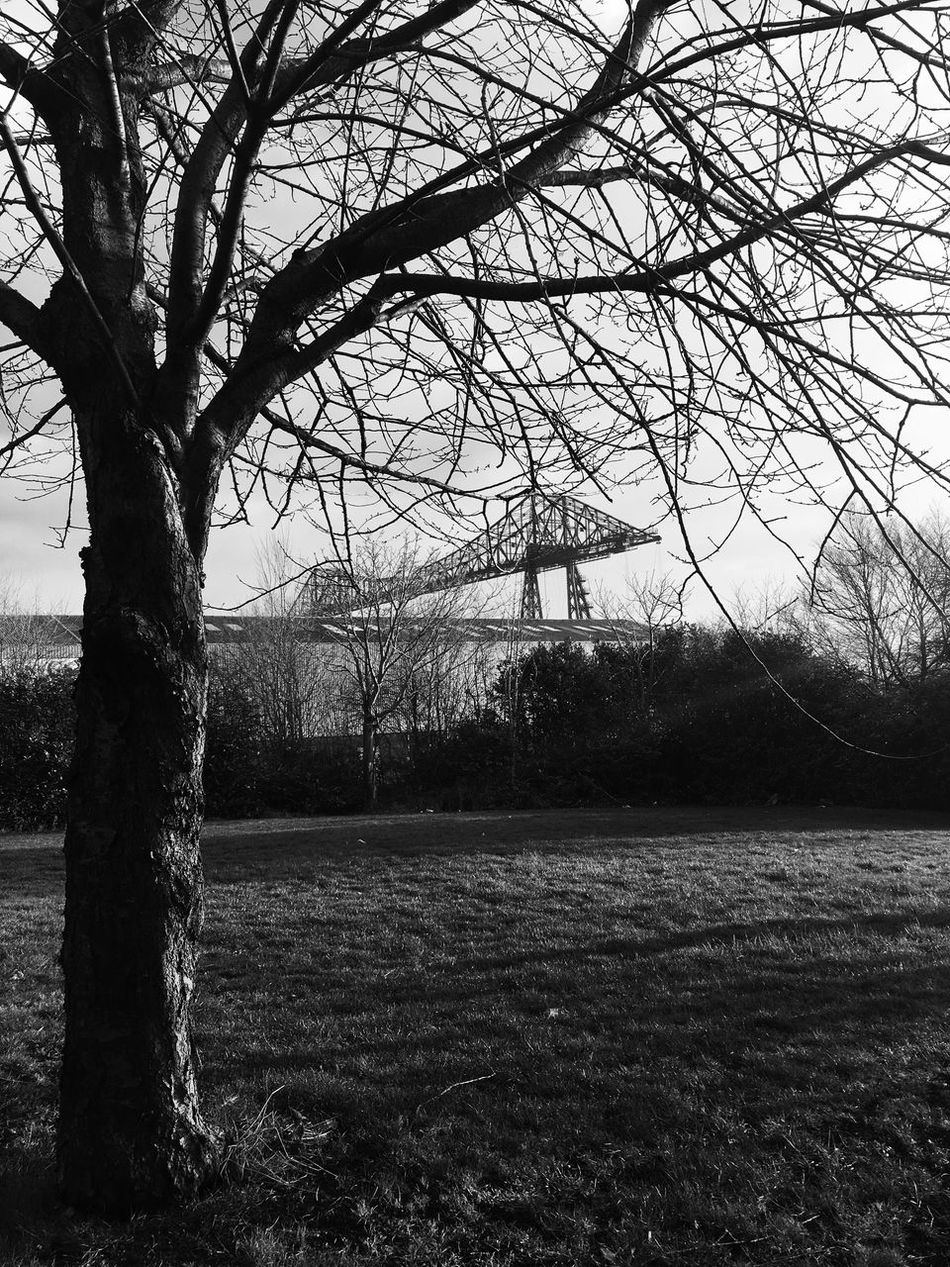 Tree Bare Tree Branch Tree Trunk Nature Tranquility No People Outdoors Day Field Beauty In Nature Landscape Scenics Sky Growth Grass The Way Forward Monochrome Photography Outdoor Photography Art Is Everywhere Modern City