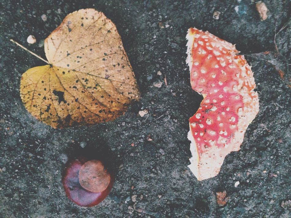 Textures And Surfaces Nature ??? Great Views Autumn Colors Fall Beauty EyeEm Nature Lover Fall Beauty