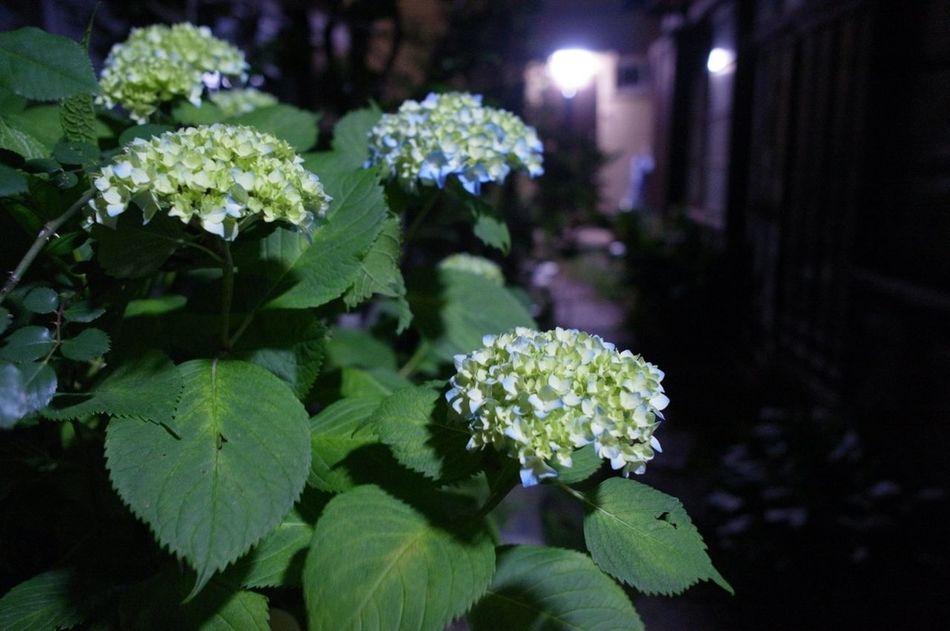 Flowers Night Lights