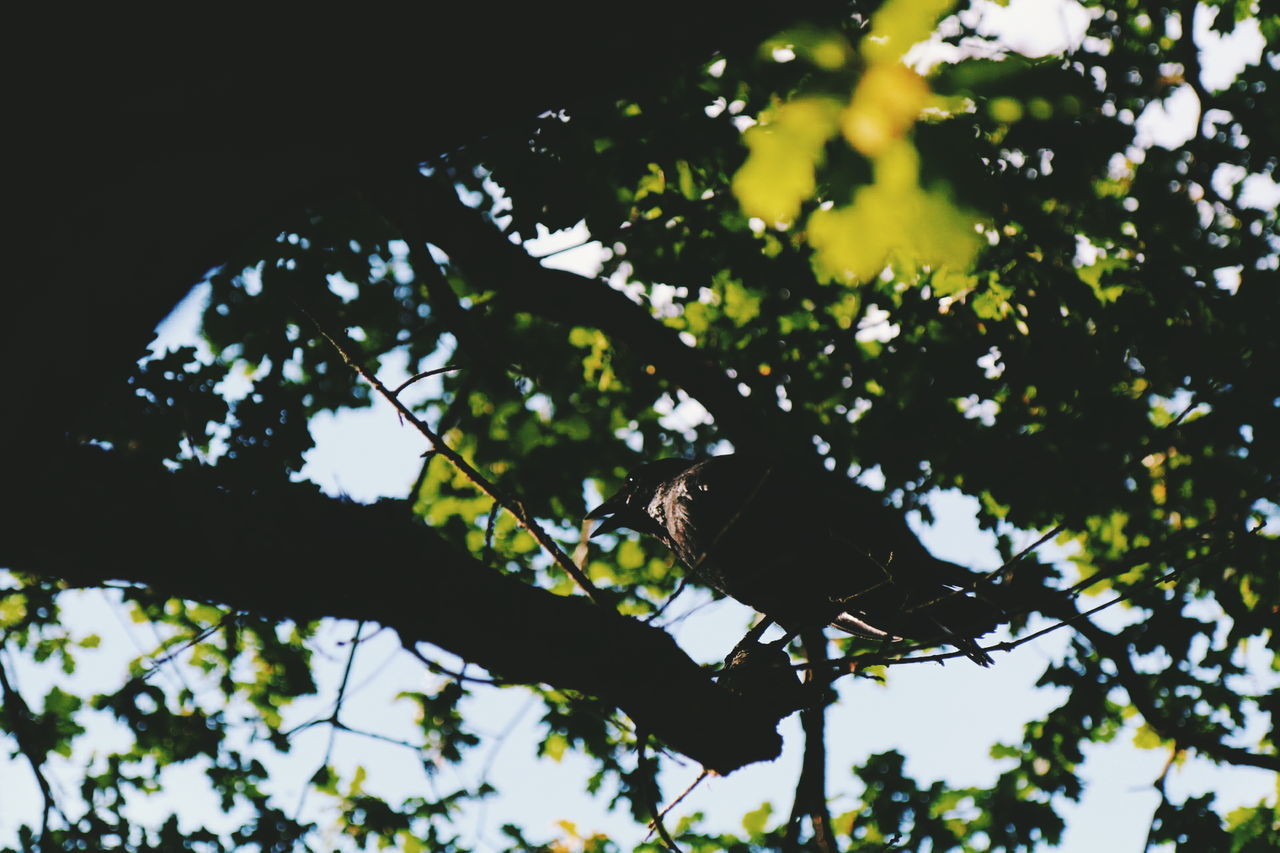 tree, low angle view, branch, animals in the wild, animal themes, one animal, nature, no people, day, outdoors, animal wildlife, leaf, growth, bird, beauty in nature, perching, sky