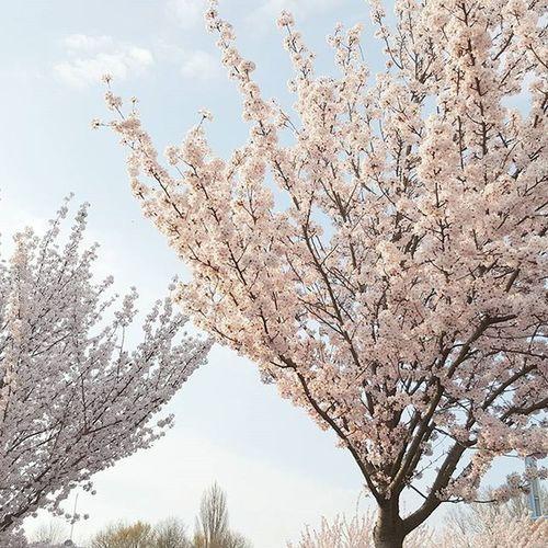 / Bei uns stürmt es richtig am Schlafzimmer entlang.😣😥 Eigentlich mag ich das, aber ich will den Frühling wieder.😕😳 Mir fehlen die Farben & die Stimmung & die Blumen & die Sonne &...Und keine Zwiebelschichten morgens mehr anziehen - schrecklich! Frei nach dem Motto: Der kleine Januar möchte aus dem Mai abgeholt werden. 😁Frühliche Träume.😊 Woistmeinfrühling Winteristeinarschloch Vielzukalt Wärmflascheanschmeissen Wonderful Photography Photooftheday Flowerpower Loveit LoveThisMoments Wonderland Dreams Nature Pastell Instalovers