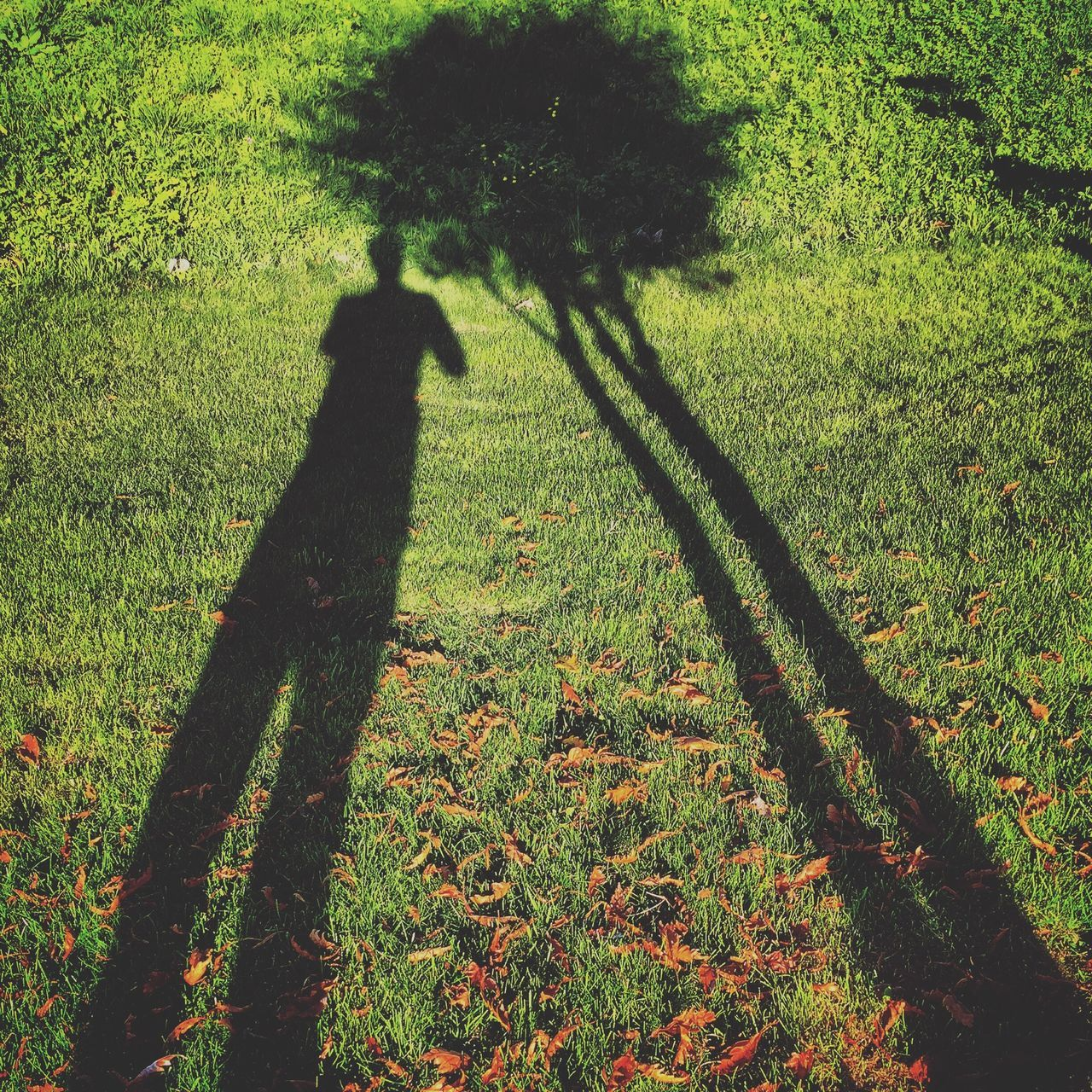 grass, shadow, green color, growth, focus on shadow, real people, field, one person, nature, sunlight, silhouette, tree, day, outdoors, people