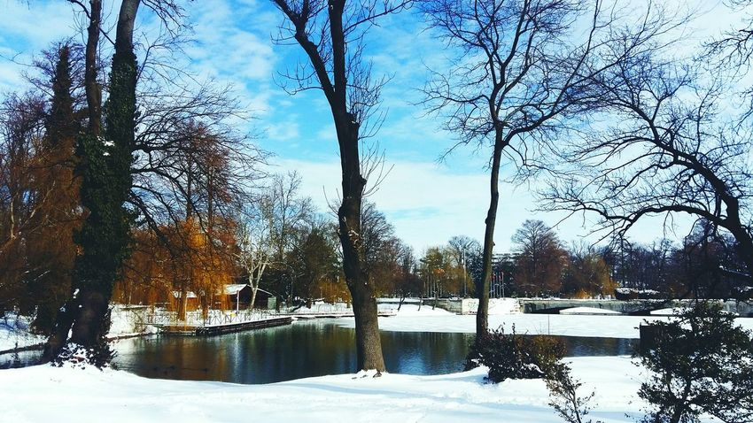 Nature Weather No People Sky Reflection Snow Winter Tree Cold Temperature Beauty In Nature Frozen Outdoors Day Water Tranquility Lake Scenics Close-up Silhouette Landscape Snowing Weather Winter Blue Leaf