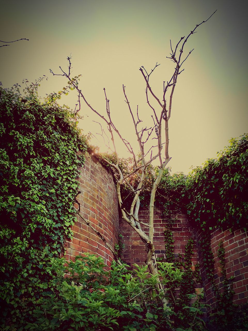 brick wall, tree, no people, outdoors, plant, nature, day, growth, ivy, architecture, built structure, beauty in nature, branch, sky