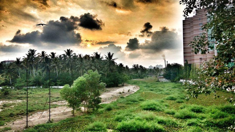 Nature No People Tree Growth Outdoors Sky Day Sunset Nature Travel Destinations Trivandrumdiaries Smoke - Physical Structure Illuminated Kerala_tourism Kerala India Keralattraction Trivandrumdiaries India Trivandrum Kerala The Gods Own Country ;) Kerala Gods Own Country
