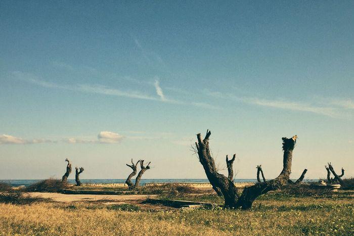 FujiX100T VSCO Cam Landscape Landscape_Collection Landscape_photography Melancholic Landscapes Landscapes Seascape Composition VSCO Trees Tree_collection  Outdoors