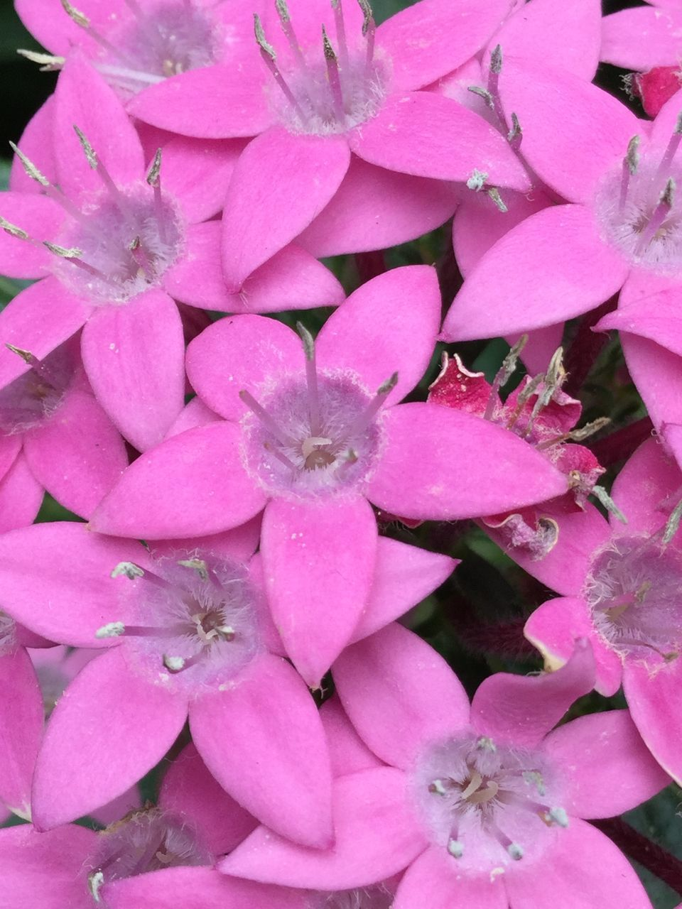 Close-up Of Pink Flowers Blooming In Park