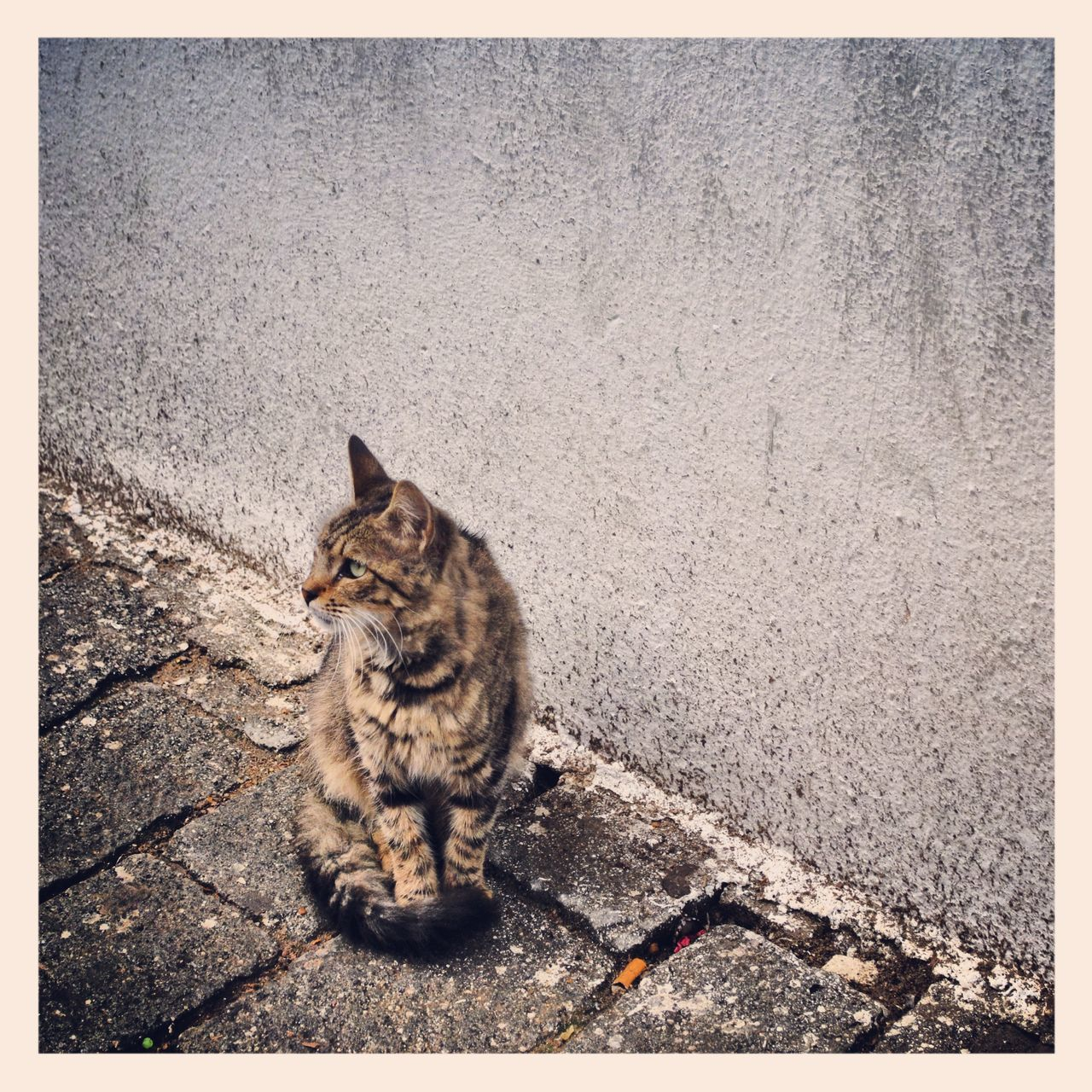 EyeEmNewHere Djerba, Tunisia Tunesia Tunesien Cat Cats Of EyeEm Streetphotography