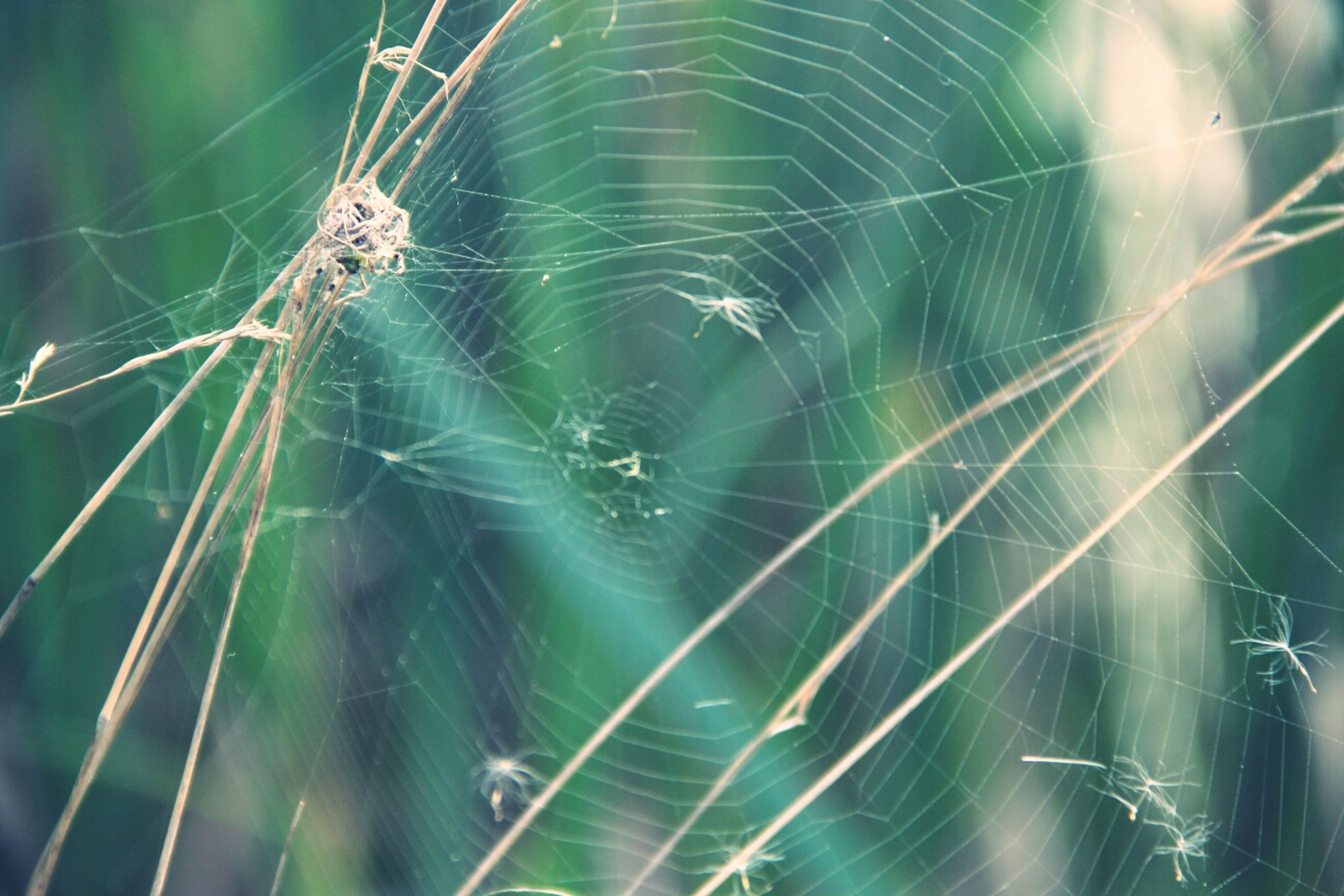 spider web, animal themes, spider, focus on foreground, one animal, insect, animals in the wild, close-up, wildlife, web, complexity, fragility, nature, natural pattern, outdoors, day, low angle view, no people, beauty in nature, selective focus