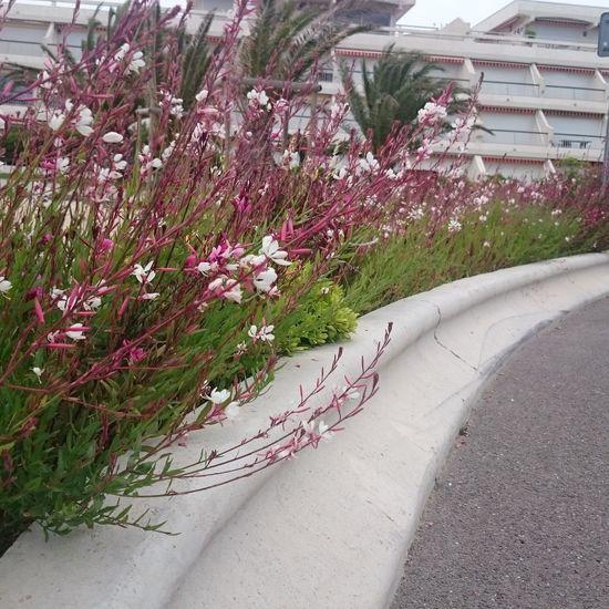 Fleurs de Camargue
