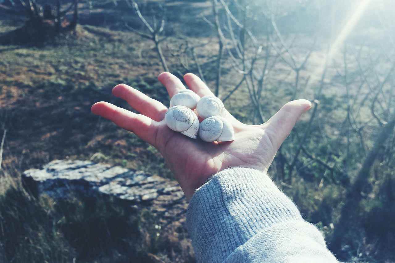 Cropped Image Of Hand Holding Sea Shells On Field