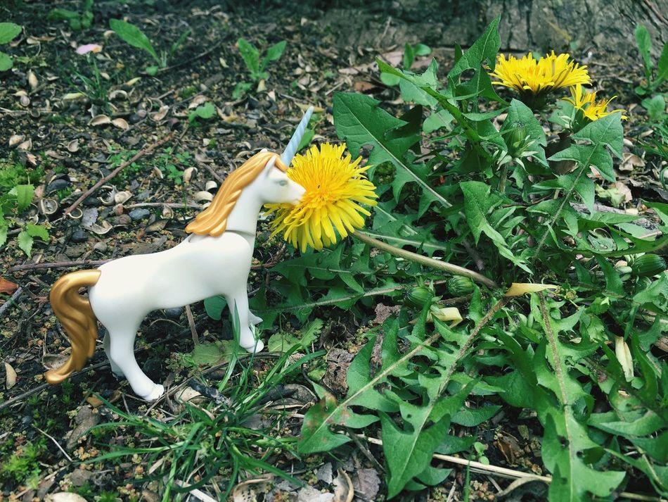 Beautiful stock photos of unicorn, Animal Representation, Art, Art And Craft, Beauty In Nature