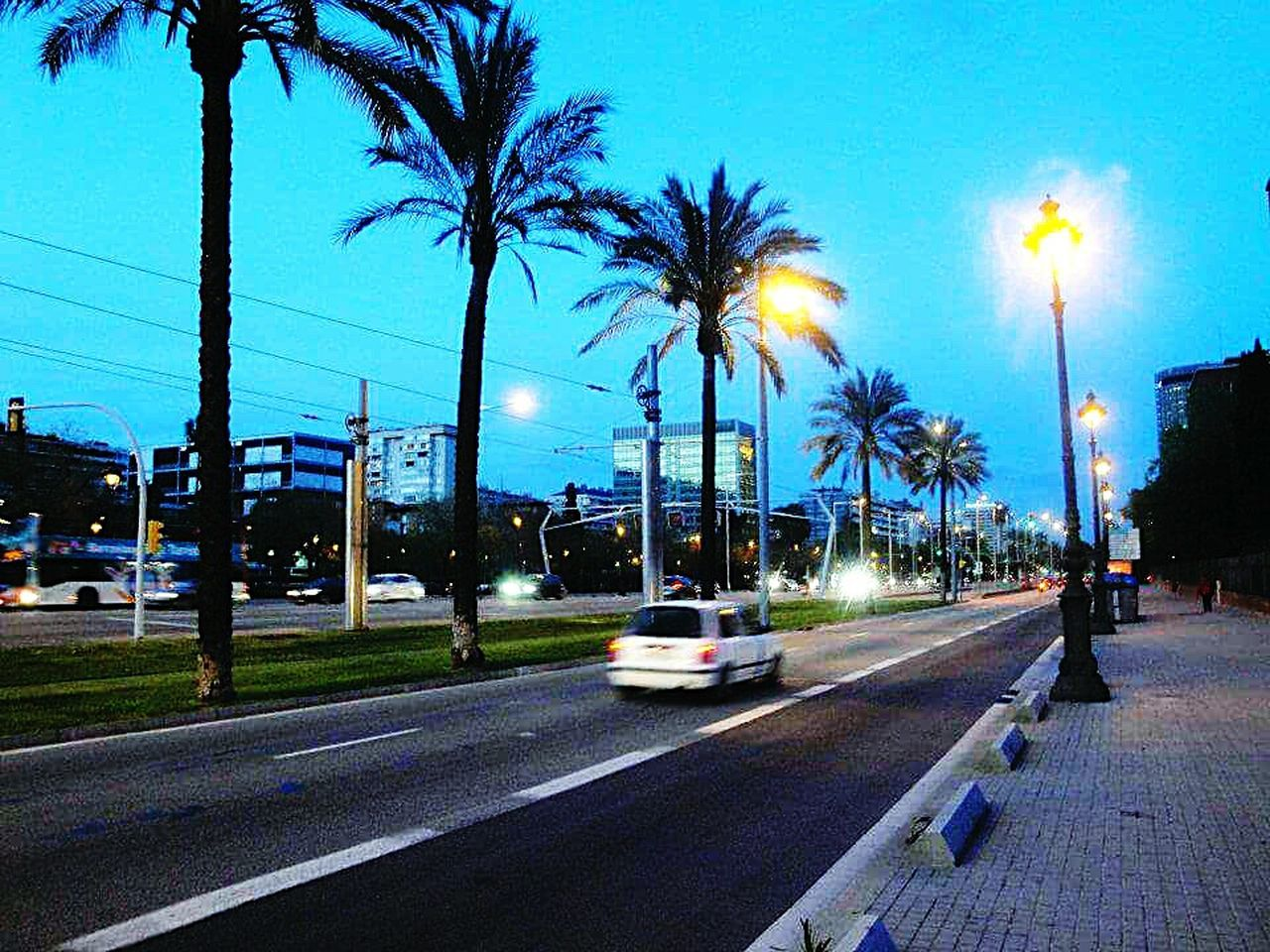 SPAIN Barcelona Diagonal Barcelona City Life City Street City Lights Palm Trees Summer CityWalk