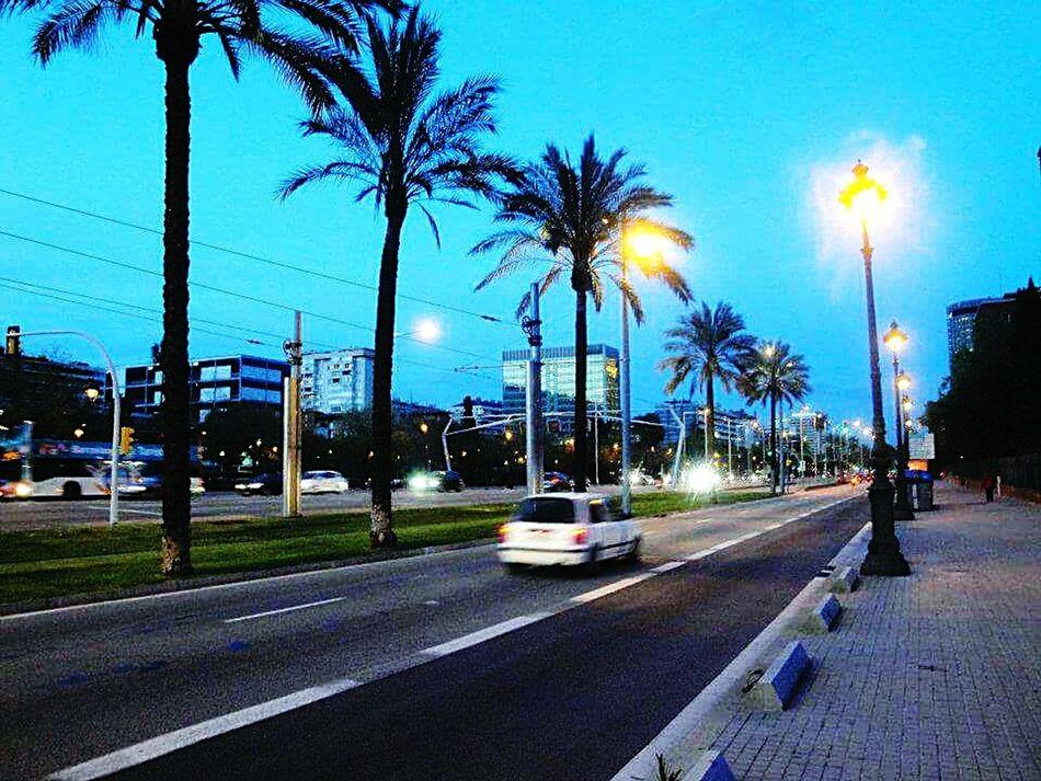SPAIN Barcelona Diagonal Barcelona City Life City Street City Lights Palm Trees Summer CityWalk