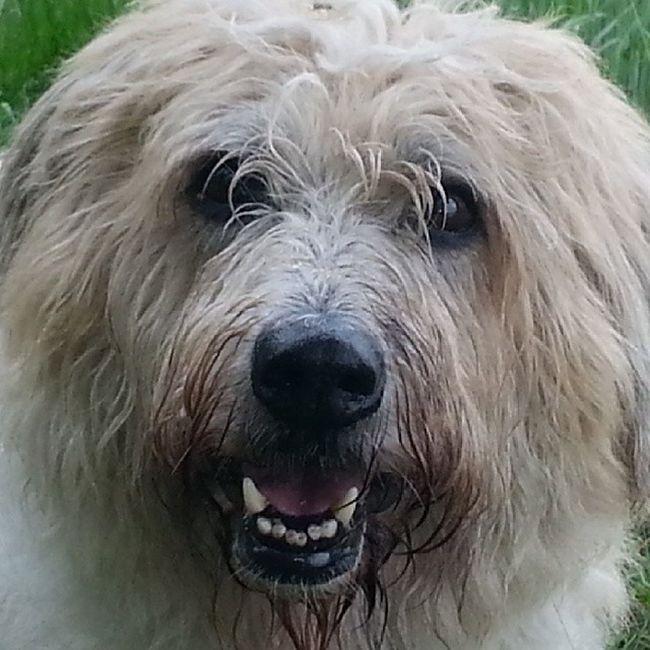Bestdog  Bestnature Dog Nature bestshot bestfoto europe germany