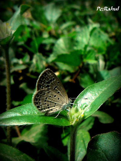 A small breakfast for a while !!!! Butterfly Closeupshot Dawn Greenary Insect Leaf Lonely Nature Photography Nectar Outdoors Plants Portrait Photography Portraits Street Photography Wildlife Photography