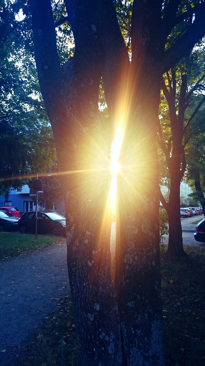 sun, sunbeam, lens flare, tree, sunlight, car, nature, outdoors, transportation, sunset, no people, day, beauty in nature, sky