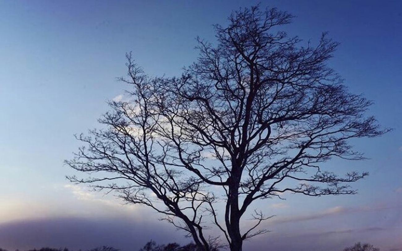 Tree Nature Sky Low Angle View Beauty In Nature Eye4photography  Sky_collection Winter_collection 空 EyeEm Best Shots - Nature Hello World EyeEm Nature Lover Day Love It Winter Taking Photos EyeEm Best Shots 3XSPUnity Relaxing Nature Tree EyeEmNewHere