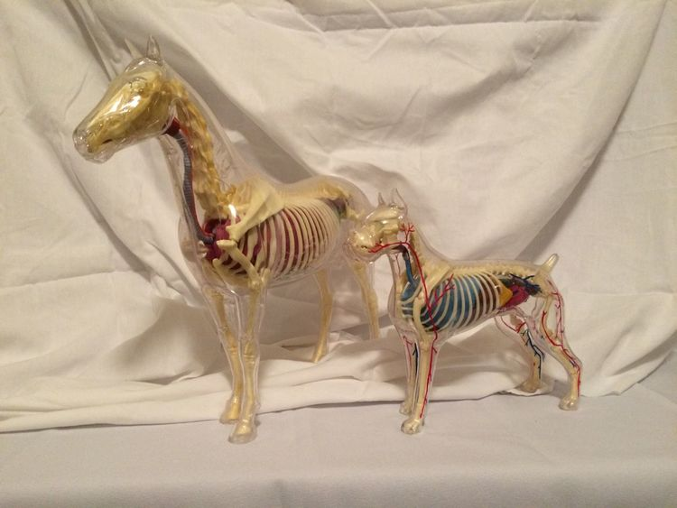 Anatomy Plastic Model Collection Still Life