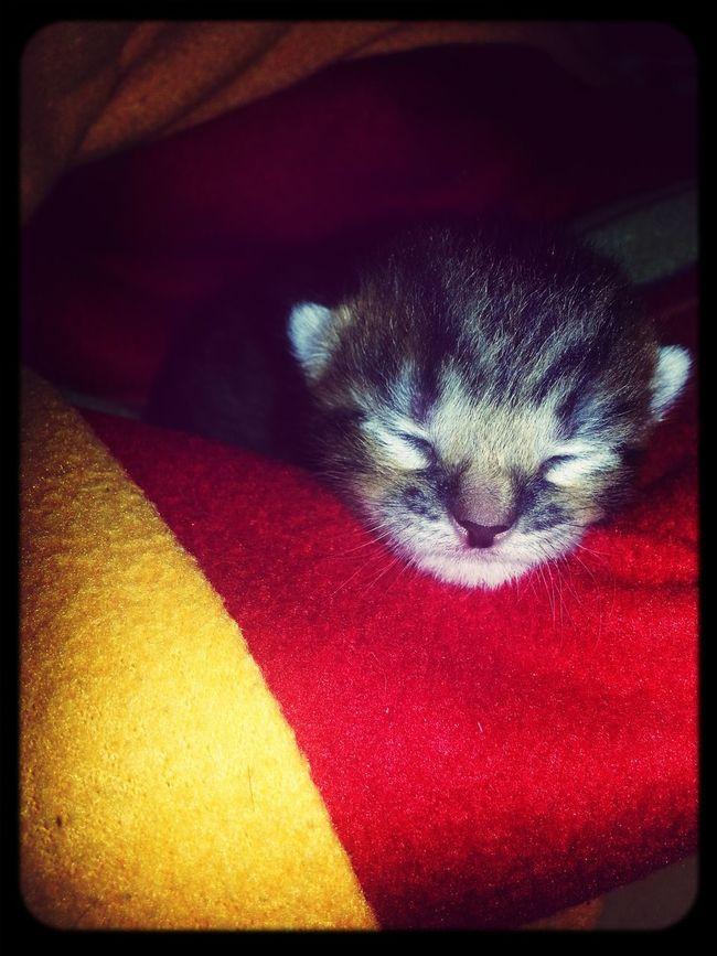 My Little Cat☺ Sweet Dreams Cutie♥ First Eyeem Photo