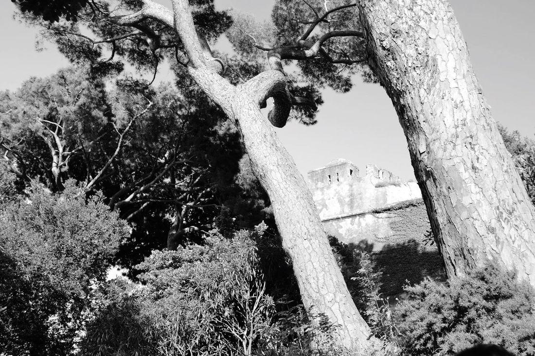 Bastia La Corse 2B Arbre Nature NikonD3100 Noir Et Blanc