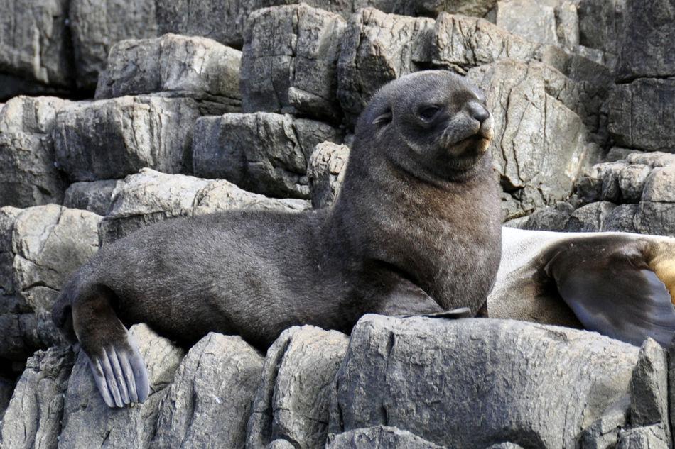 Beautiful stock photos of seal, Animal Themes, Animal Wildlife, Animals In Captivity, Aquatic Mammal