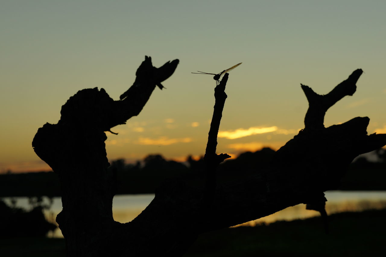 silhouette, sunset, animal themes, nature, animals in the wild, outdoors, real people, mammal, one animal, sky, animal wildlife, one person, bird, beauty in nature, people