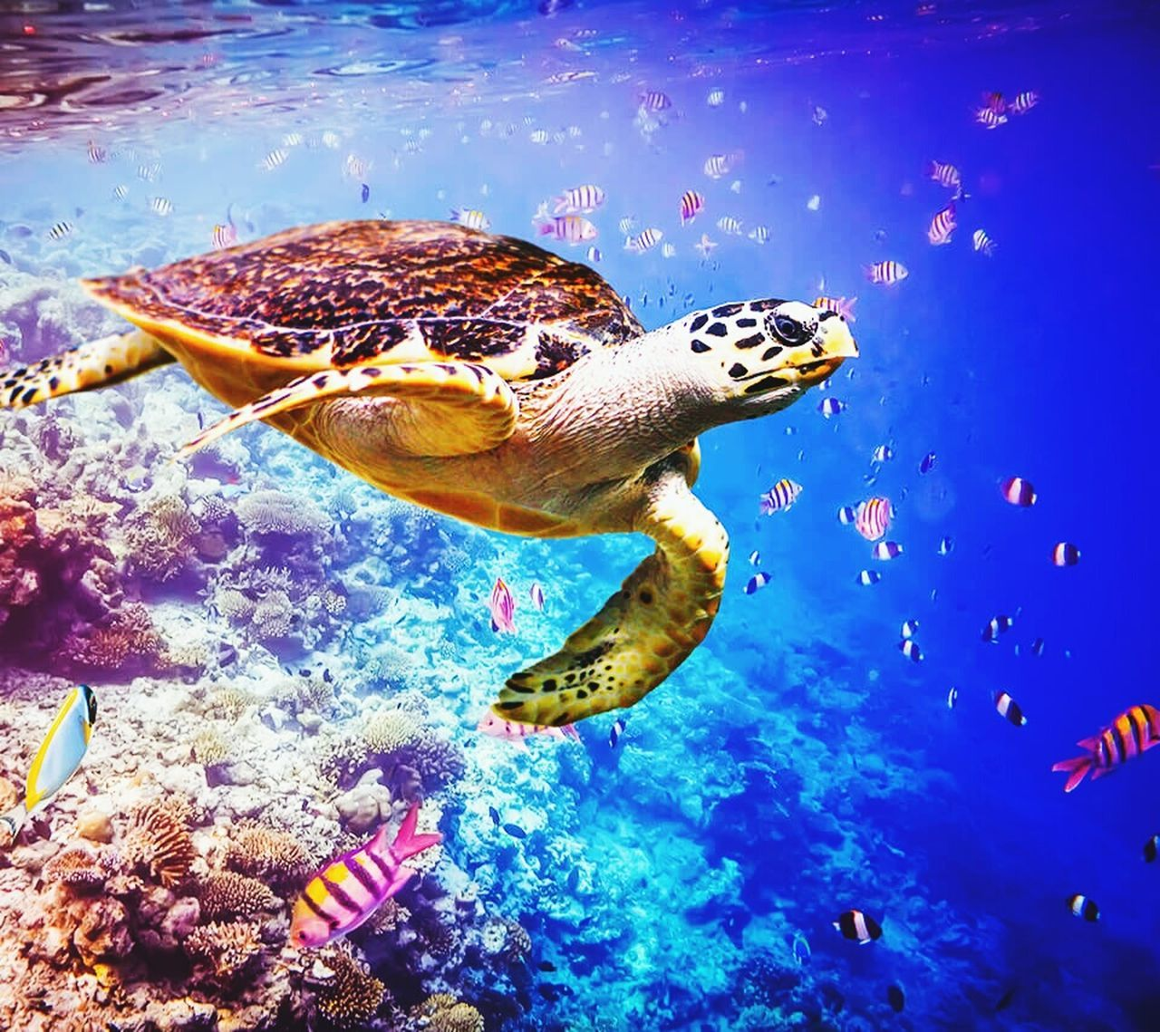 animal themes, swimming, sea life, underwater, water, animals in the wild, fish, one animal, animals in captivity, aquarium, turtle, sea turtle, undersea, animal wildlife, sea, no people, indoors, nature, blue, coral, reptile, beauty in nature, day, close-up